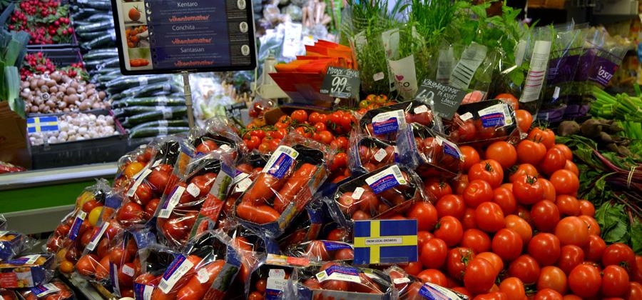 Tomaterna plockas, packas och levereras ut till butiker och restauranger tre dagar i veckan. På det sättet är de alltid fräscha!